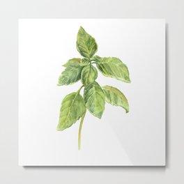 The Basil Plant Metal Print