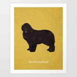 Canadian Dogs: Newfoundland Art Print