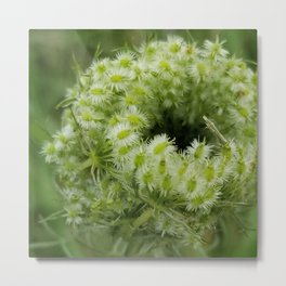 Queen Anne's lace bud Metal Print