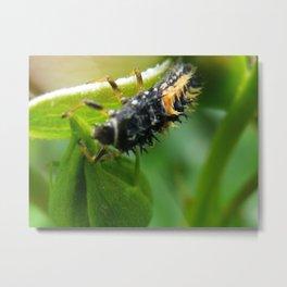 ladybug larva Metal Print