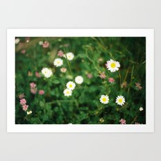 Film Flowers Art Print