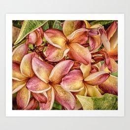 Rainbow Plumeria Hawaii Tropical Art Print