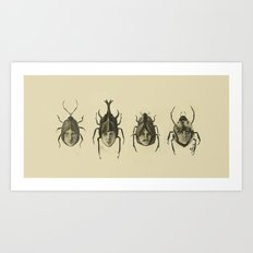 Beetle Morphology Art Print
