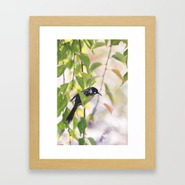 Honey Eater Framed Art Print