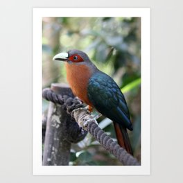 A colorful tropical bird perched on a rope Art Print