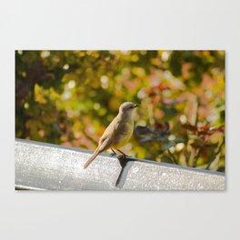 Little Bird Sitting On A Bench Canvas Print