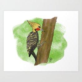 Celeus flavescens Art Print