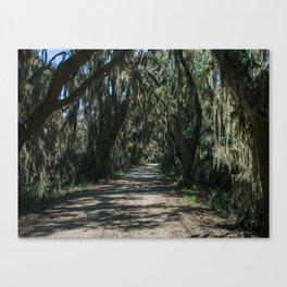 Georgia Spanish Moss Road Canvas Print