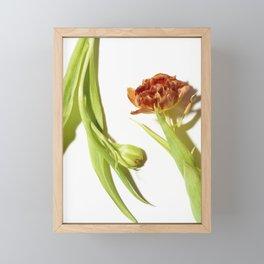 Bud & Bloom Framed Mini Art Print