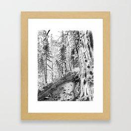 On the Trail Framed Art Print