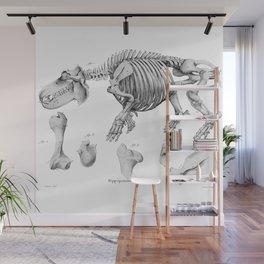 Vintage Hippo Skeleton Wall Mural
