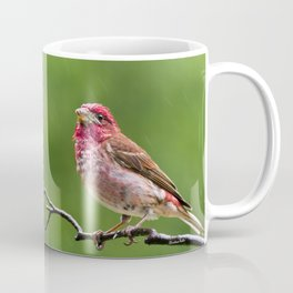 Finch in the Rain Coffee Mug
