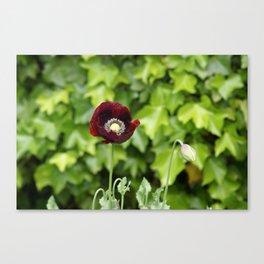 Opium Flower Canvas Print