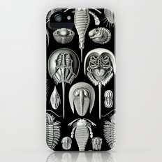 Trilobites and Fossils by Ernst Haeckel iPhone (5, 5s) Slim Case