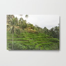Colorful Ricefields Landscape| Nature & Travel Photography in Bali - Palmtrees in Indonesia, Asia Metal Print