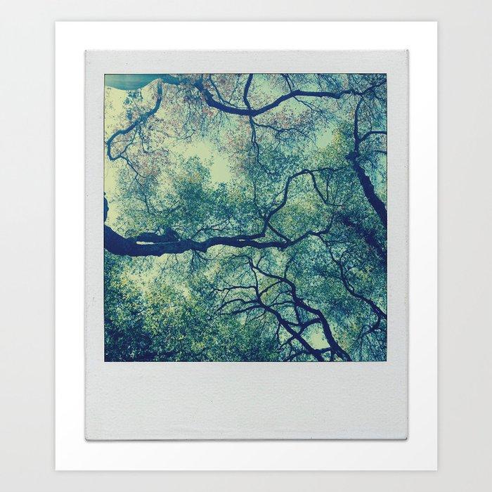 Tree Canopy On Polarized Film Art Print
