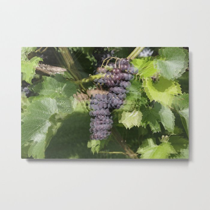 Seeing Double? Maybe its too much fruit of the vine! Metal Print