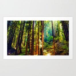 Henry Cowell Redwood State Park Art Print