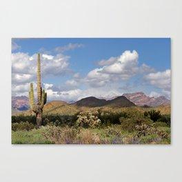 Arizona Spring Desert Canvas Print
