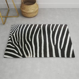 Beautiful Zebra skin and stripes. Zebra black and white texture background. Zebra real fur close-up view. Nature abstract pattern. Rug
