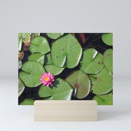 Pink Flower in the Pond Mini Art Print