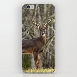 White Tailed Deer Eight Point Buck iPhone Skin