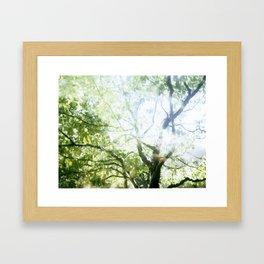 First sunshine after a dark Portland winter. Framed Art Print