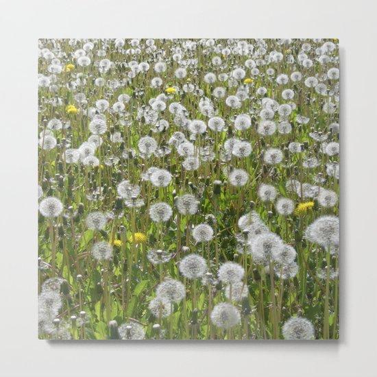 dandelion meadow II Metal Print