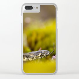 Viperine water snake Clear iPhone Case
