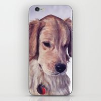 golden retriever iPhone & iPod Skins featuring Golden Retriever by Heather Amber