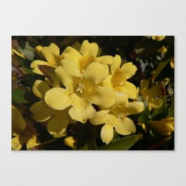 Yellow Carolina Jasmine Blossom Close Up Canvas Print