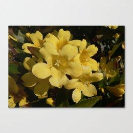 Yellow Carolina Jasmine Blossom Close Up Canvas Print