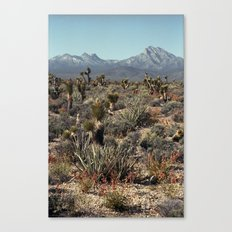 Cold Creek, Nevada Canvas Print