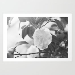 Once in a While - Black and White Flower Art Print