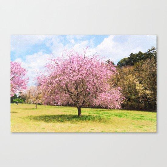 Beautiful cherry blossoms Canvas Print