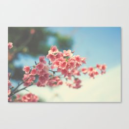 Sakura Series 1 Canvas Print