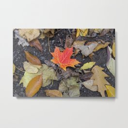 Colorful Maple Leaf Metal Print