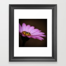 One Purple Daisy Framed Art Print