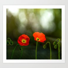 Two red poppies Art Print