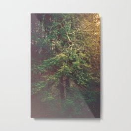 Evermore Metal Print