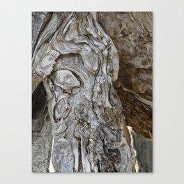 wood skin Canvas Print