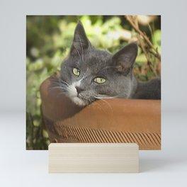 Here's Looking at YOU, Kid! Mini Art Print