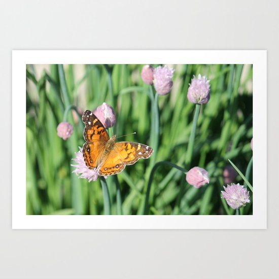 Orange Butterfly on Chives Art Print