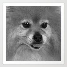 Cute Pomeranian dog Art Print