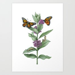 Monarch Butterfly Life Cycle Art Print