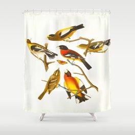 Evening grosbeak John James Audubon Vintage Birds Of America Illustration Shower Curtain