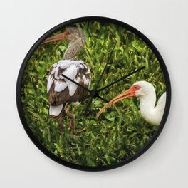 White Ibis - Adult and Juvenile Wall Clock