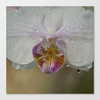 orchid Canvas Prints featuring Orchid by Mary Kilbreath
