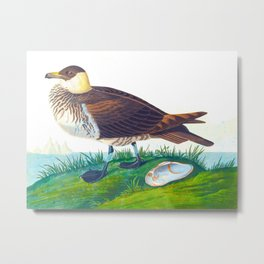 'Jager' by John James Audubon Metal Print