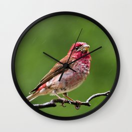 Finch in the Rain Wall Clock